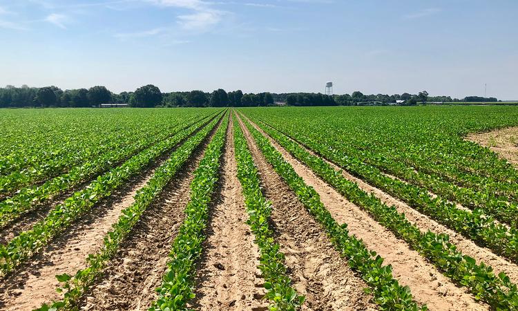 Des Arc Arkansas Row Crop Farm