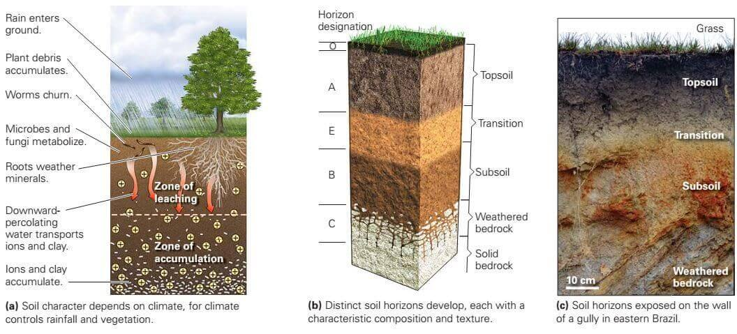 Formation of soil is a complex and delicate process that creates various unique horizons of land