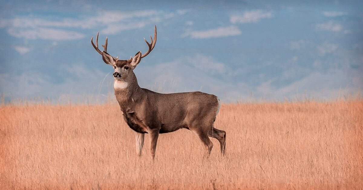 Hunting and recreational leases of the land is an additional passive farmland income source