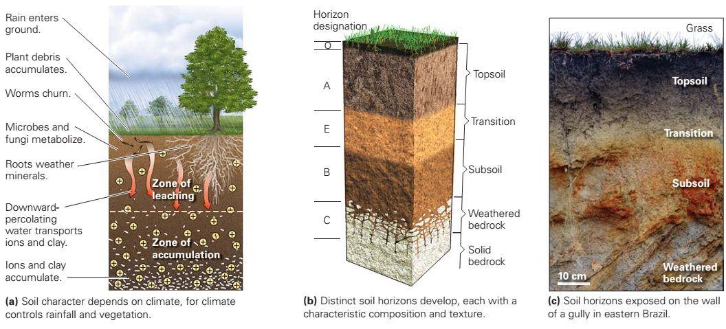 how soil forms distinct horizons.jpg