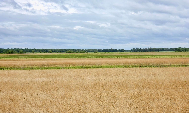 Mississippi Value-Add Rice Farm