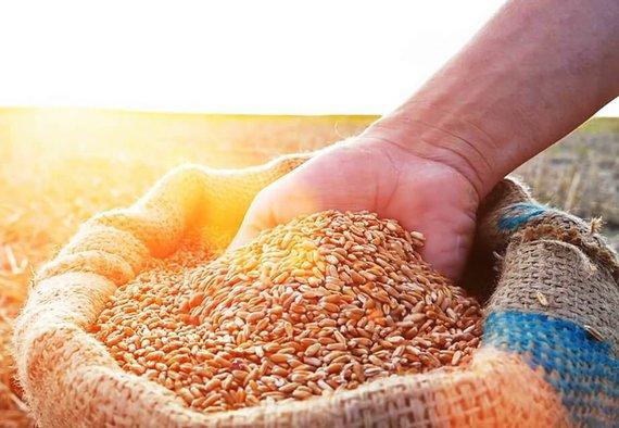 https://media.acretrader.com/news/feeding-the-world-grain-in-hand.jpg